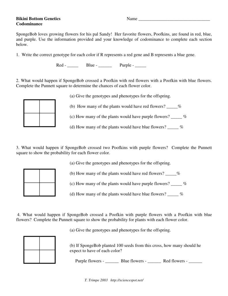worksheet Dihybrid Punnett Square Worksheet spongebob genetics worksheet answers the best and most bottom imgkid image kid