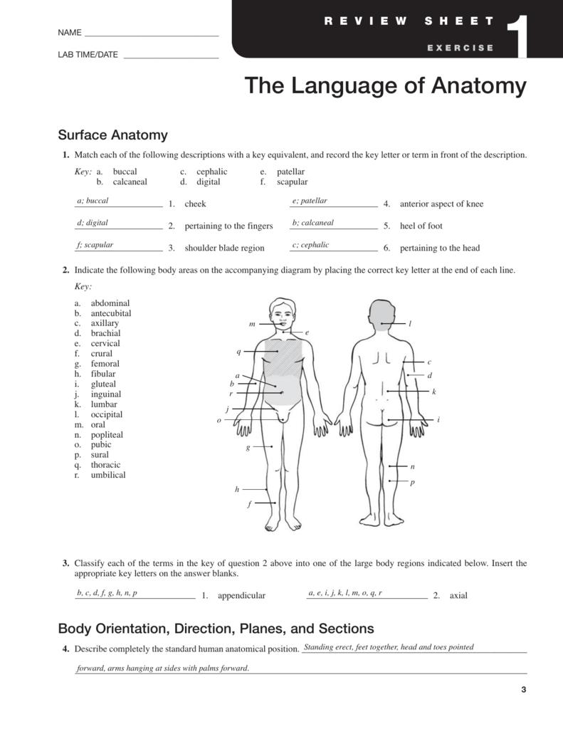 Surface Anatomy - halkuffanatomy