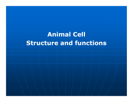 Animal Cell Structure and functions