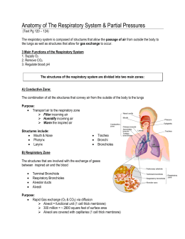 Anatomy of The Respiratory System & Partial Pressures
