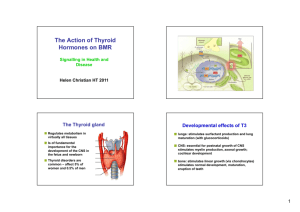 The Action of Thyroid Hormones on BMR