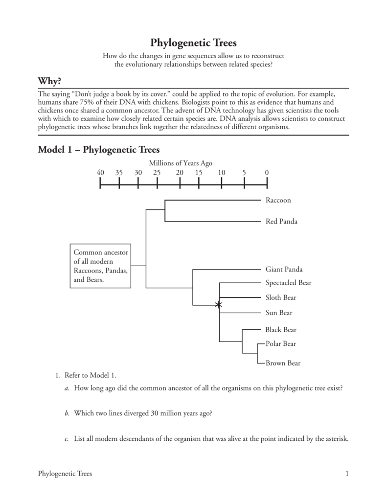 worksheet Phylogenetic Tree Worksheet 22 phylogenetic trees
