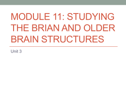 Module 11: Studying the Brian and Older Brain Structures