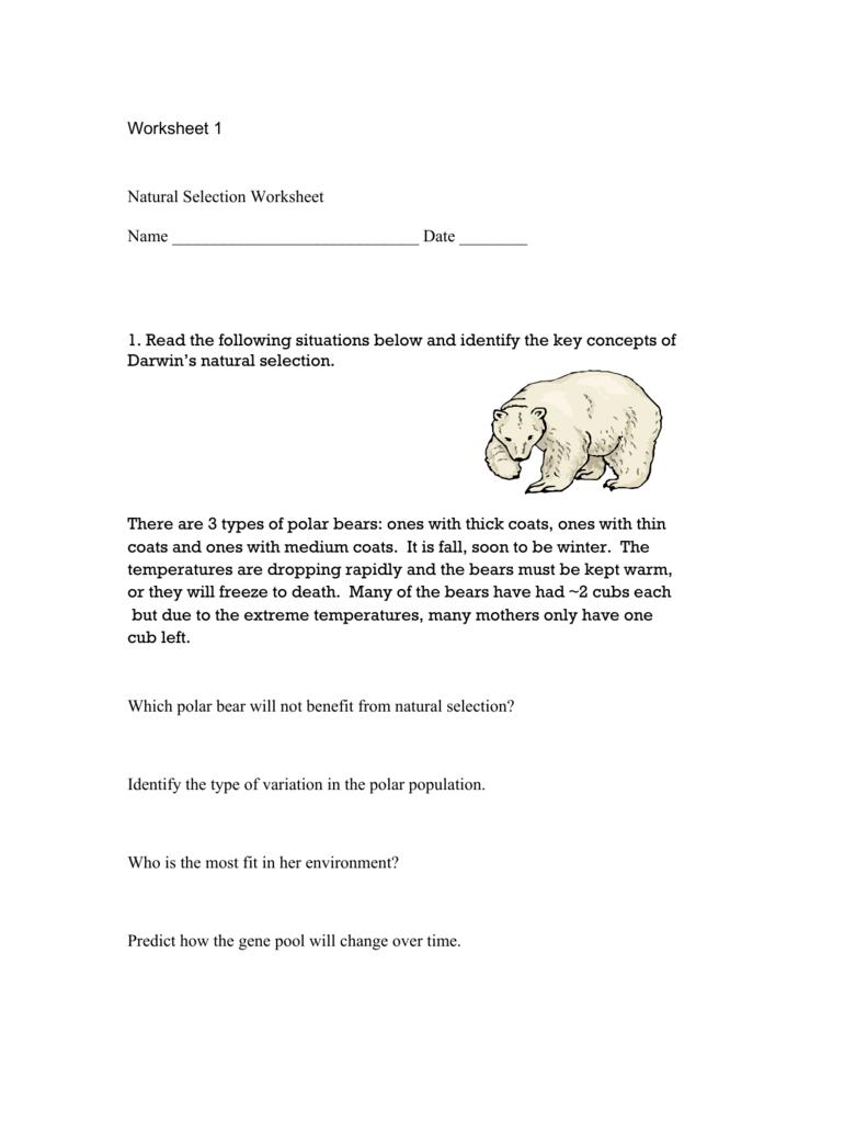 Natural selection worksheet 1 Summer Research Program for – Natural Selection Worksheet