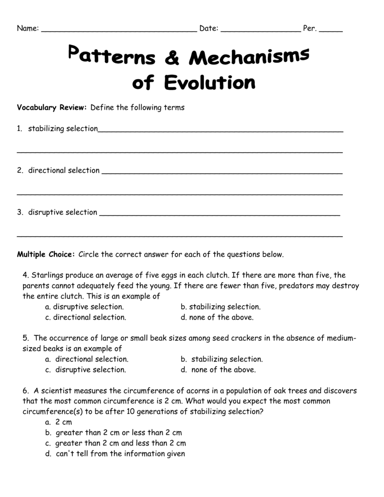 Selection Worksheet