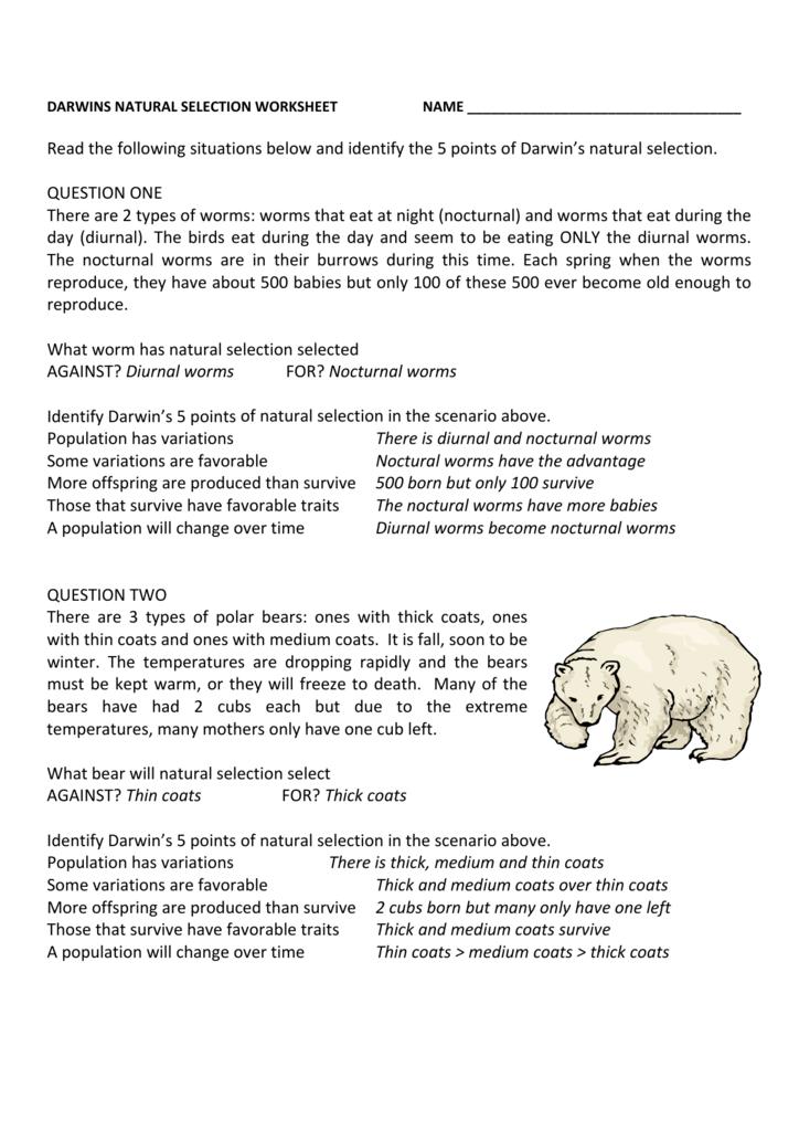 Darwin S Natural Selection Worksheet Answers