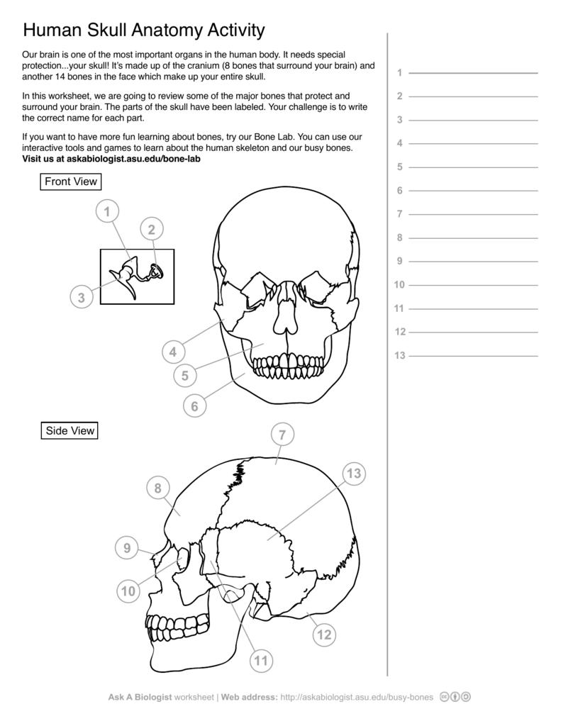 Uncategorized Skull Labeling Worksheet ask a biologist human skeleton