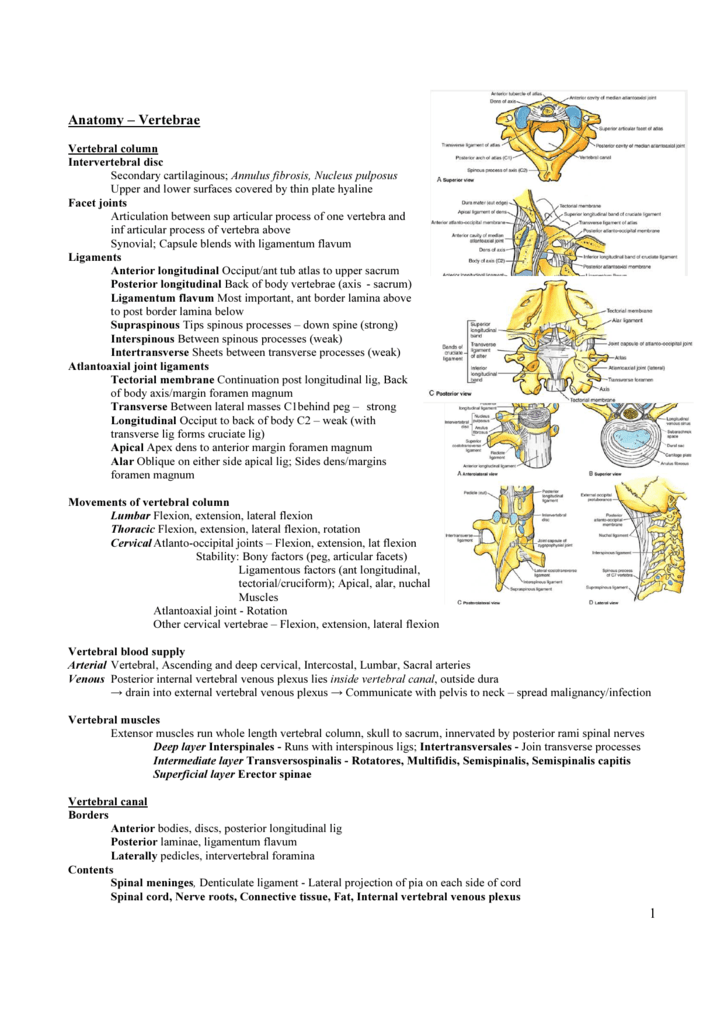 1 Anatomy – Vertebrae