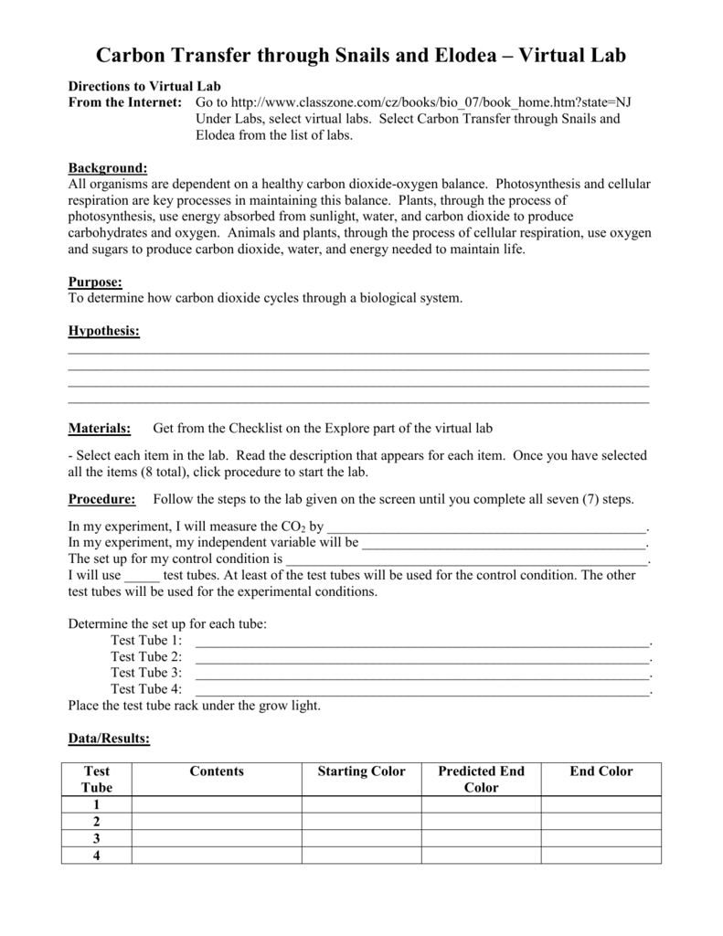 Worksheet Photosynthesis Making Energy Worksheet Answers Carlos