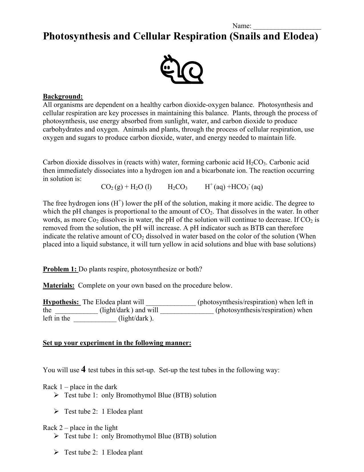 All Grade Worksheets Photosynthesis And Cellular Respiration – Cellular Respiration Worksheets