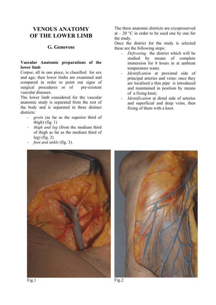venous anatomy of the lower limb - S.I.F.