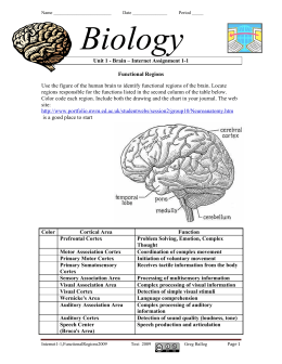 Unit 1 - Brain – Internet Assignment 1