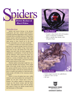 P2154 Spiders: Brown Recluse & Black Widow