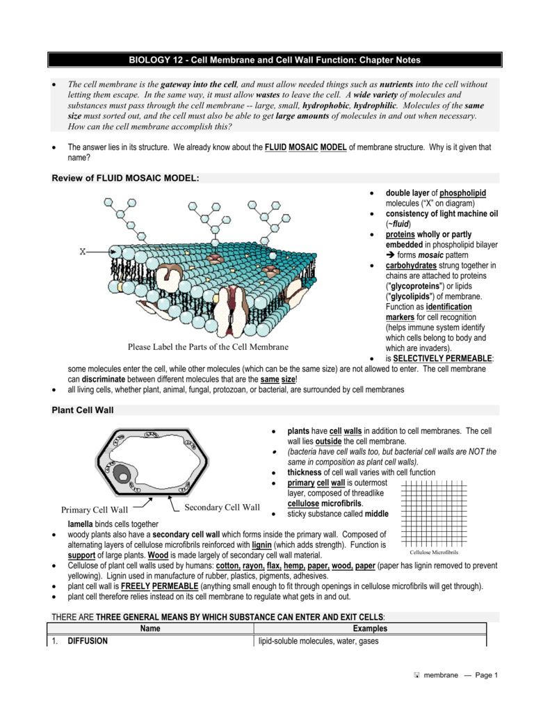 worksheet The Role Of Membranes In Cells Worksheet biology 12 cell membrane and wall function