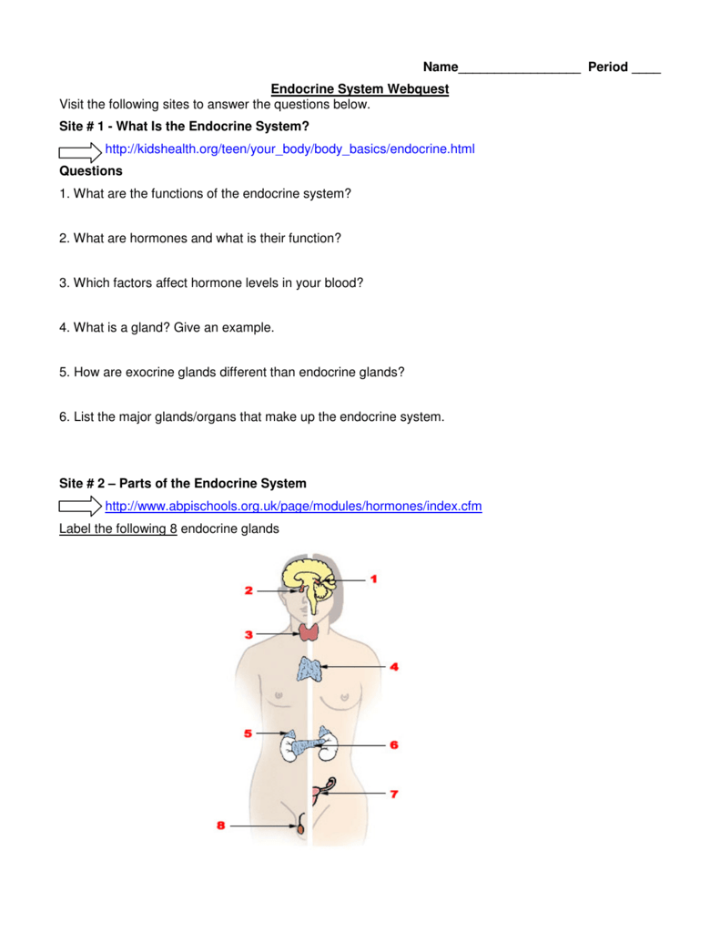 worksheet The Endocrine System Worksheet name period endocrine system