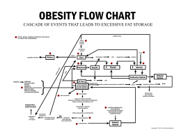 Obesity Flow Chart of Causes