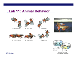Lab 11: Animal Behavior