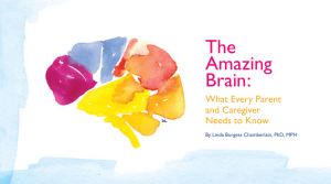 The Amazing Brain - Institute for Safe Families