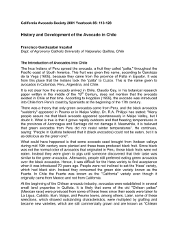History and Development of the Avocado in Chile