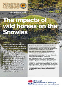 The impacts of wild horses on the Snowies