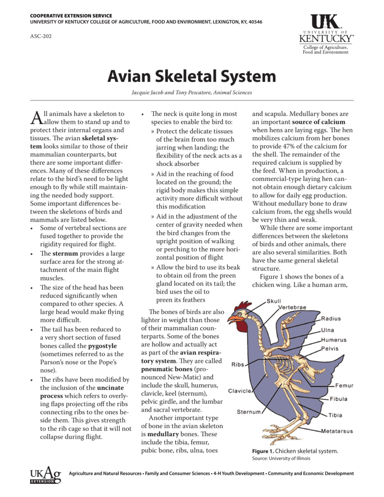 Avian Skeletal System - UK College of Agriculture