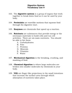 Vocabulary List 9: Digestive System