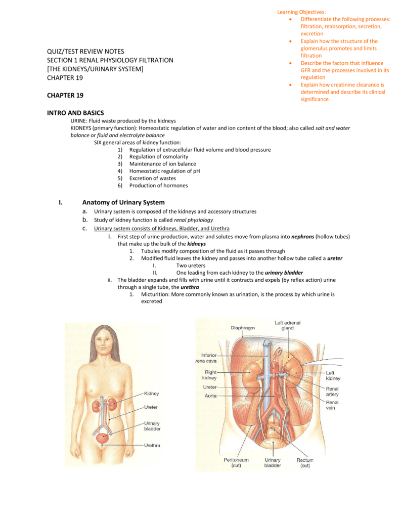 QUIZ/TEST REVIEW NOTES SECTION 1 RENAL PHYSIOLOGY