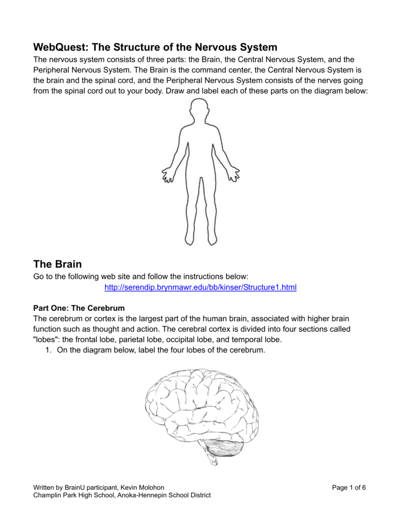 Webquest The Structure Of The Nervous System The Brain
