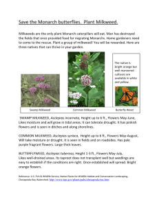 Save the Monarch butterflies. Plant Milkweed.