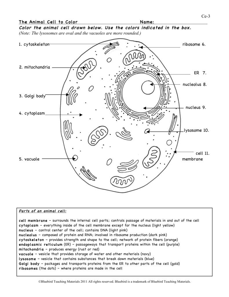 animal cell ws