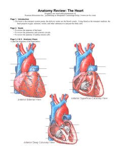 Anatomy Review: The Heart