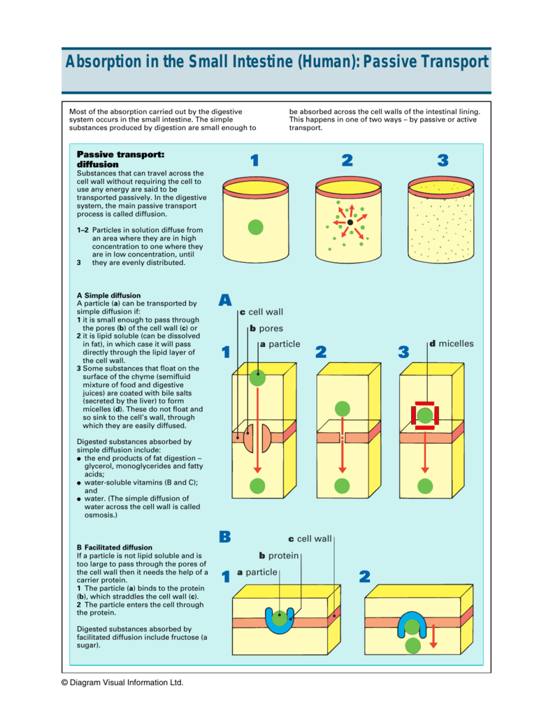 passive absorption of water