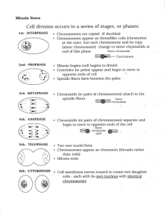 Cell division occurs in a series of stages, or phases.
