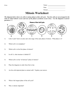 mitosis worksheet. Black Bedroom Furniture Sets. Home Design Ideas