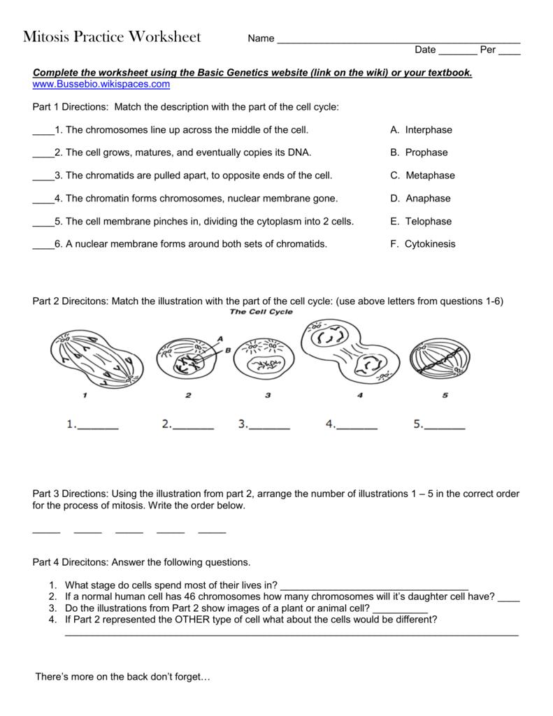 Meiosis Matching Worksheet Answer Key - Nidecmege
