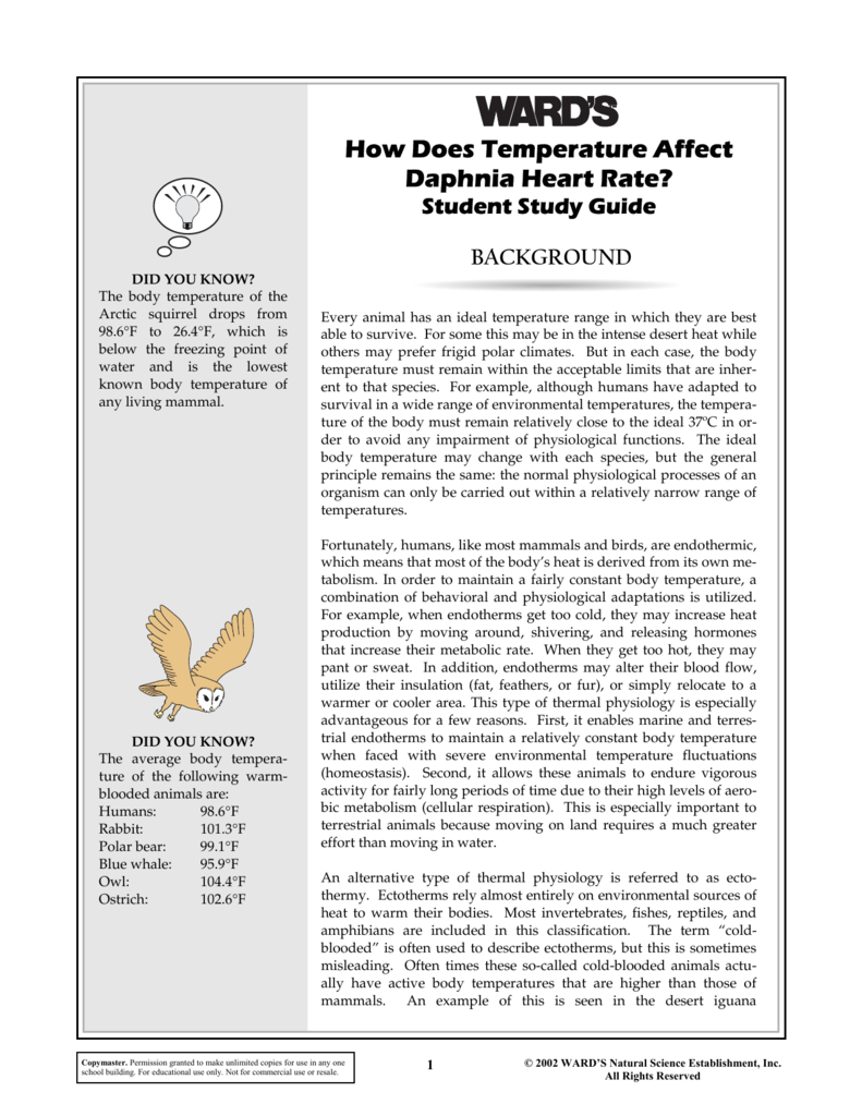 How Does Temperature Affect Daphnia Heart Rate?