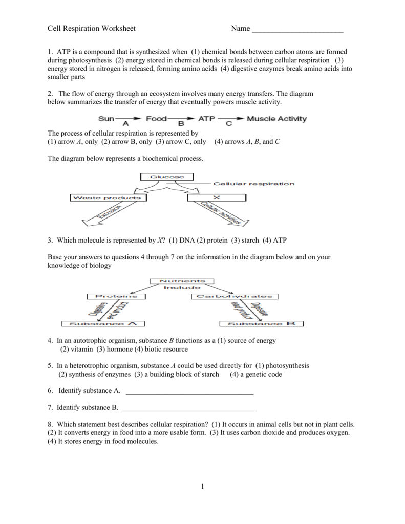 All Grade Worksheets » Photosynthesis And Cellular Respiration ...