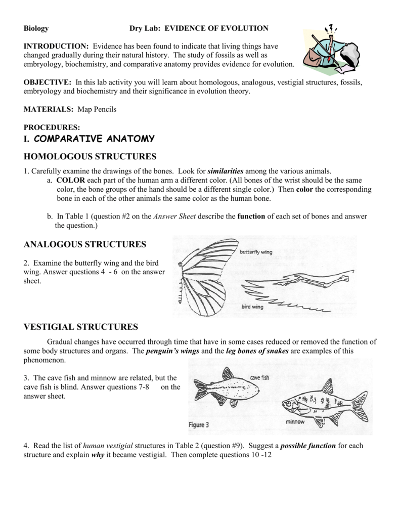 Evidence of evolution worksheet answers pogil