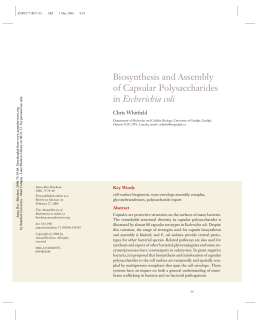 Biosynthesis and Assembly of Capsular Polysaccharides in