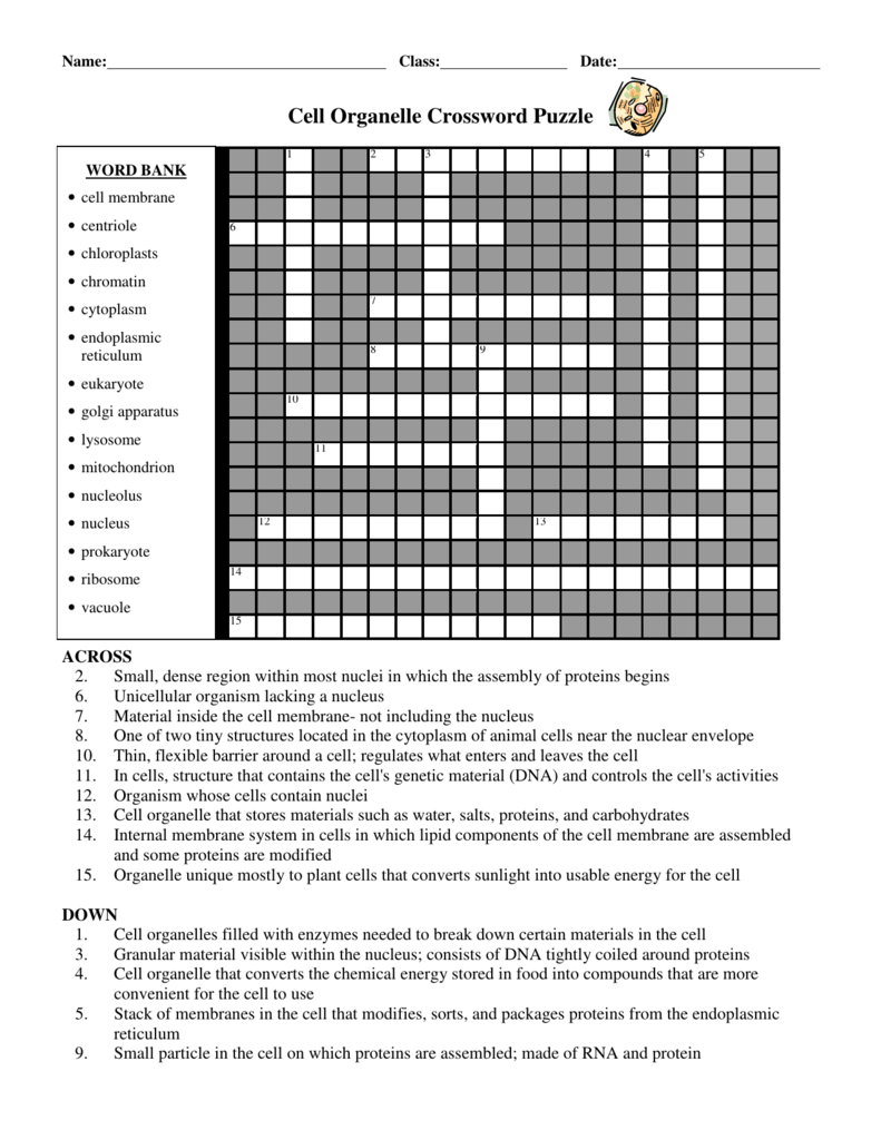 worksheet Cell Organelles Table Worksheet 008368723 1 128d98211ca739e643353ff370ea4e96 png