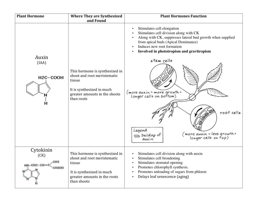 worksheet Plant Hormones Worksheet plant hormone chart