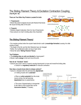 The Sliding Filament Theory & Excitation Contraction Coupling