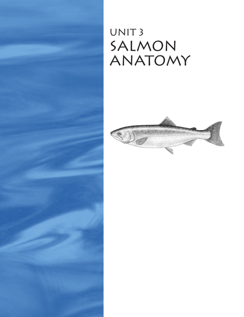 Salmon Internal Anatomy Topsimages