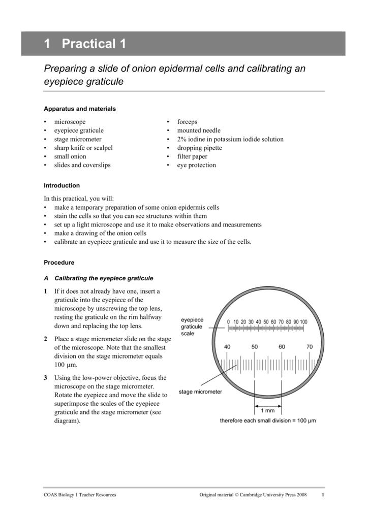 a calibrating the eyepiece graticulea) profi le of outer epidermal peel of