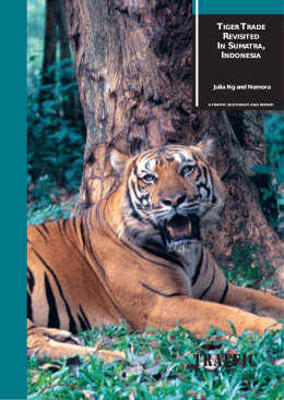 Tiger trade revisited in Sumatra, Indonesia