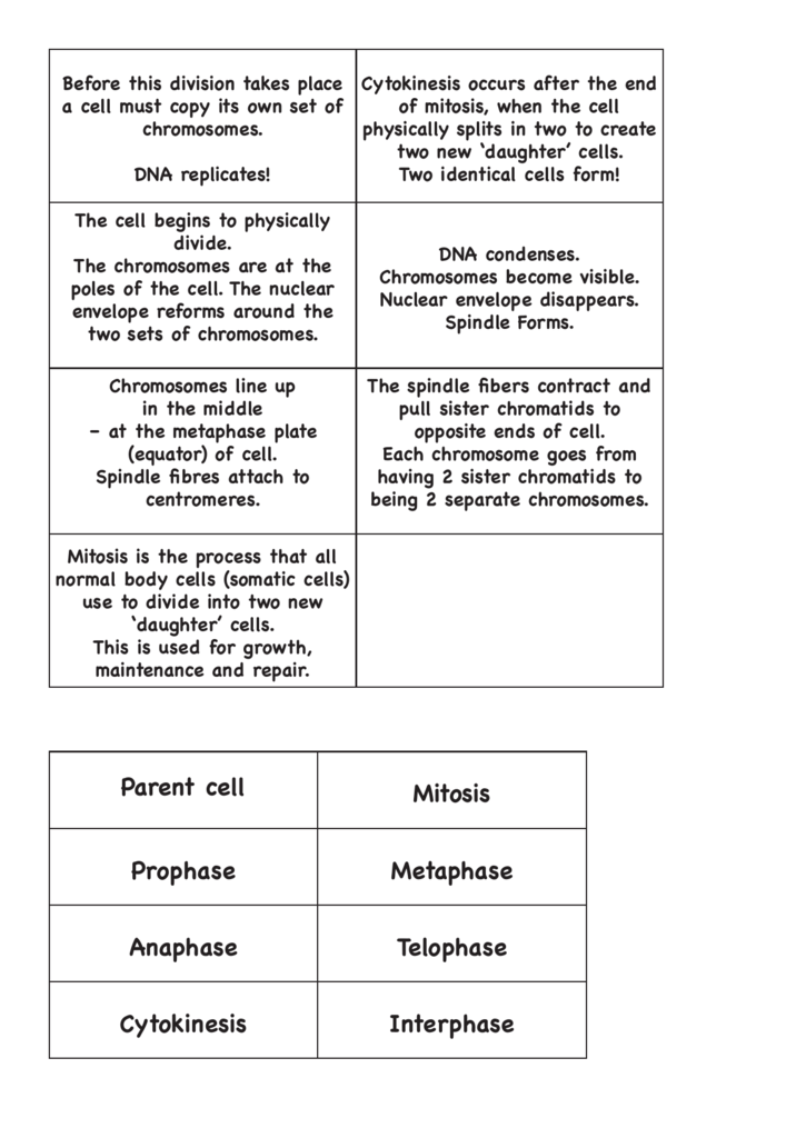 Cell Cycle Mitosis Worksheet Answer Sheet