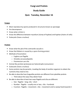 Fungi and Protists Study Guide Quiz: Tuesday, November 16