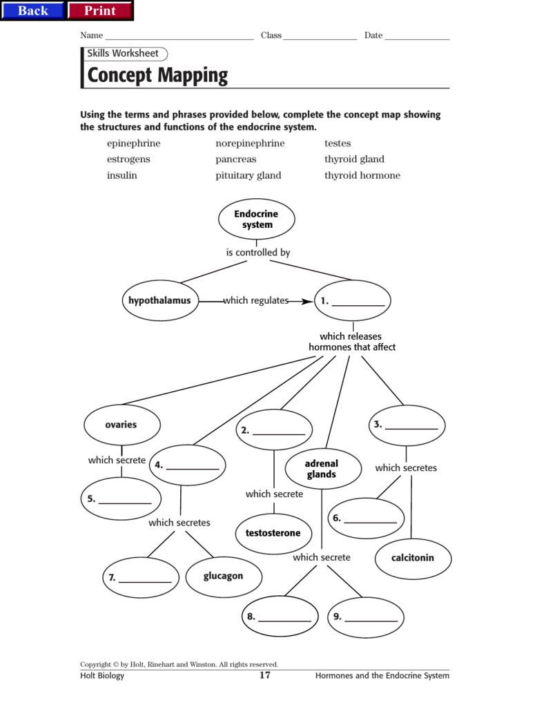 Endocrine Concept Map