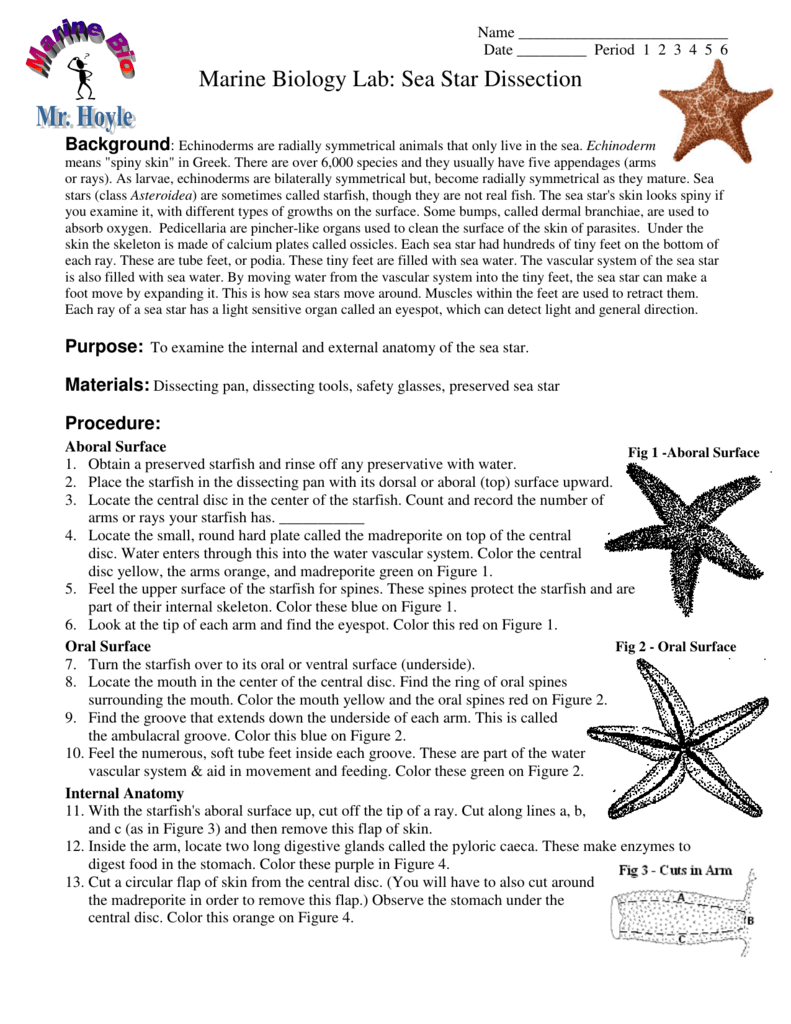 Uncategorized Starfish Dissection Worksheet starfish dissection worksheet worksheets doriandnimo thousands visual dictionary internal anatomy google search
