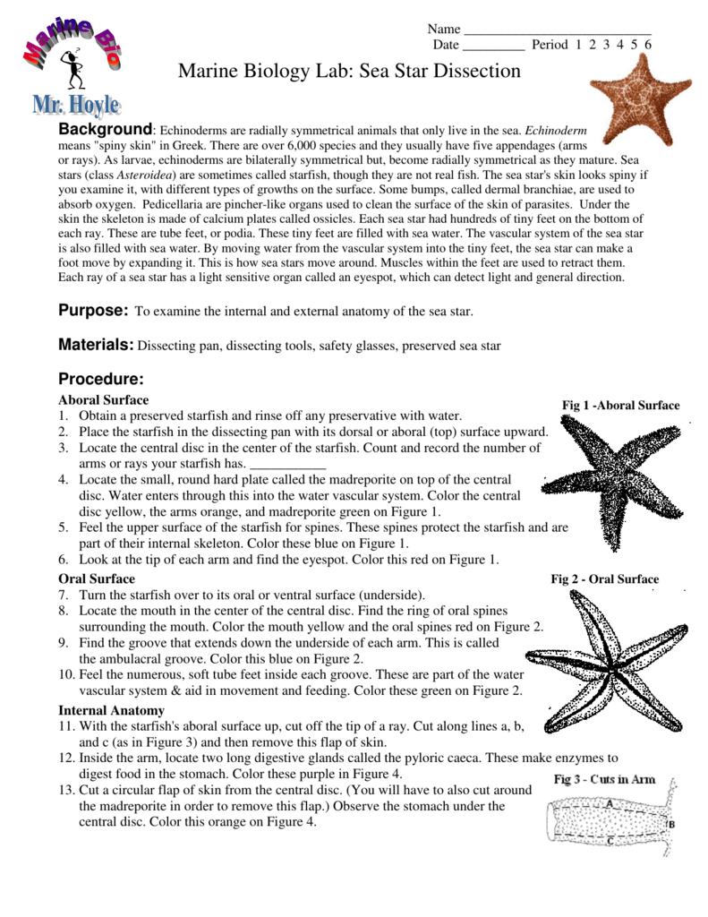 Marine Biology Lab: Sea Star Dissection